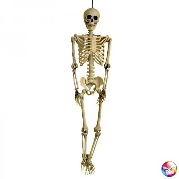 Squelette Réaliste 3D