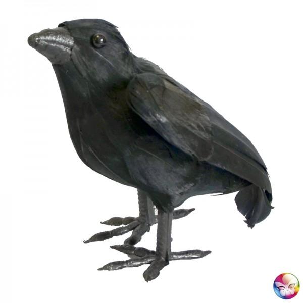 Corbeau Plumes 16 cm